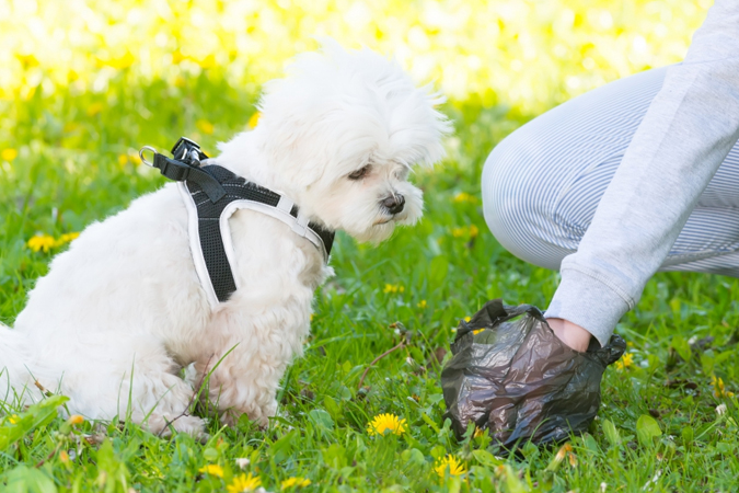 Dog Owner Etiquette